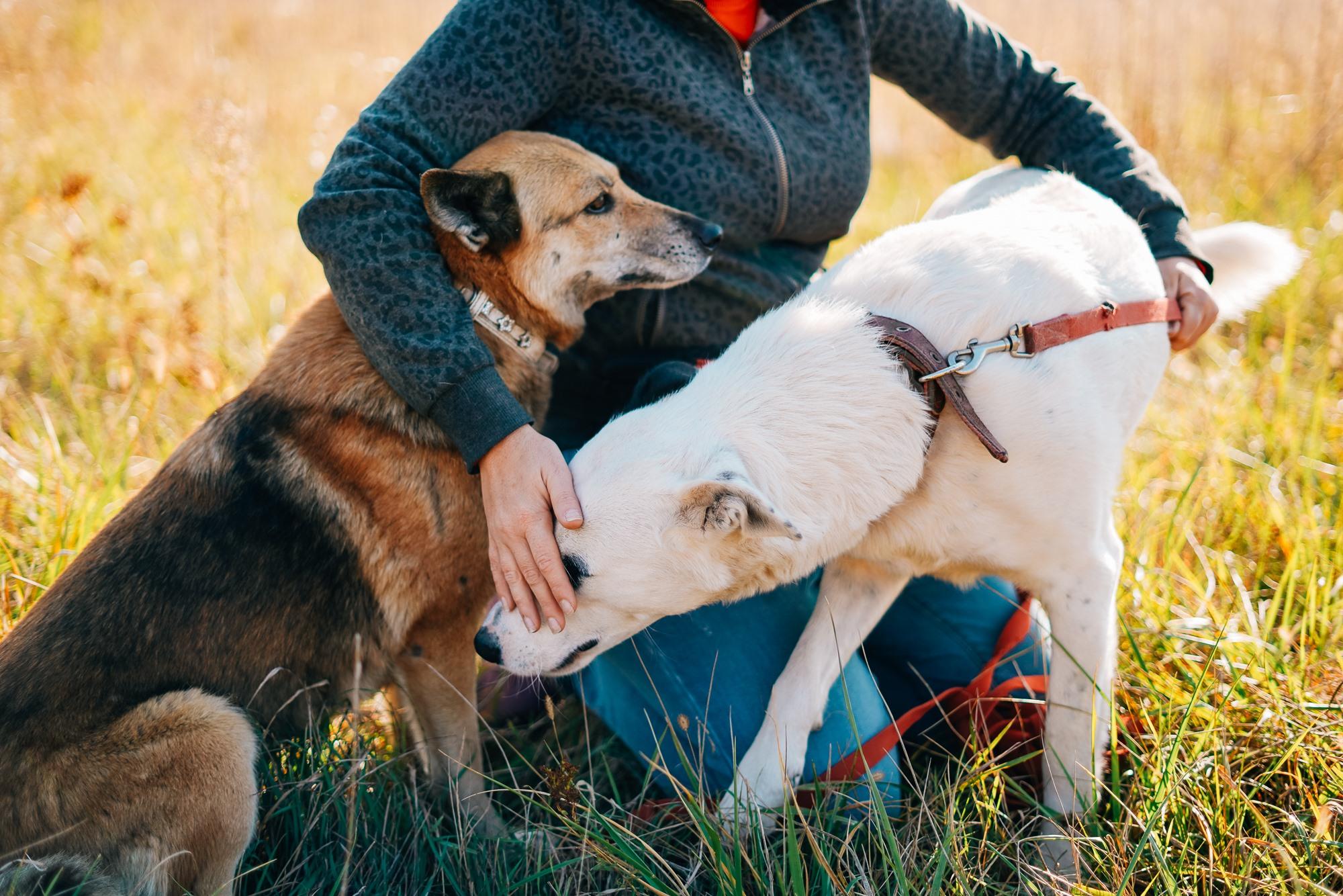 Врятувати життя тварин із притулків